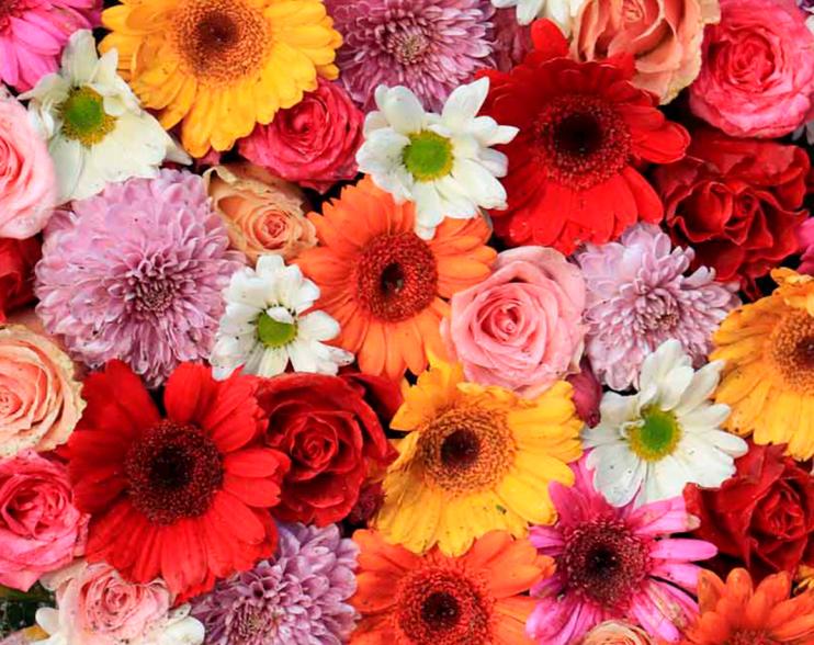 Buque de Flores: Quais são os principais Buques?